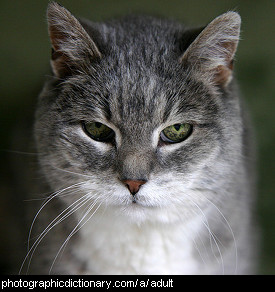 Photo of an adult cat
