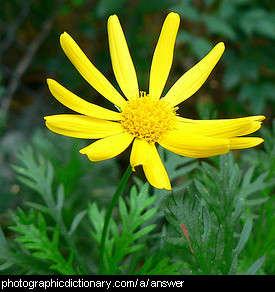 Photo of a yellow flower