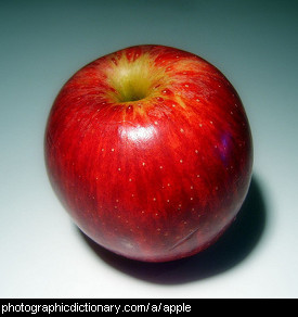 Photo of an apple.