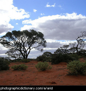 Photo of an arid landscape