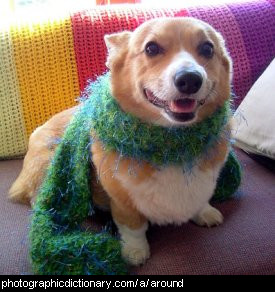 Photo of a dog wearing a scarf