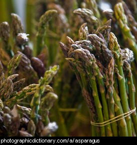 Photo of asparagus spears