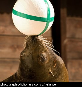 Photo of a seal balancing a ball on its nose