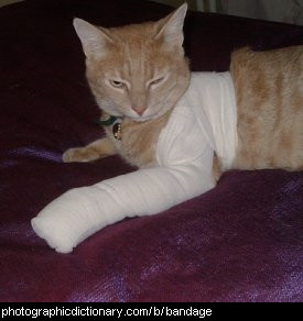 Photo of a bandaged cat