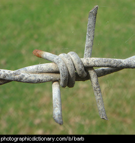 Photo of a single barb on barb wire.