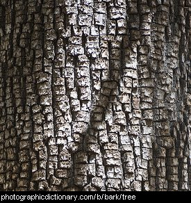 Photo of tree bark
