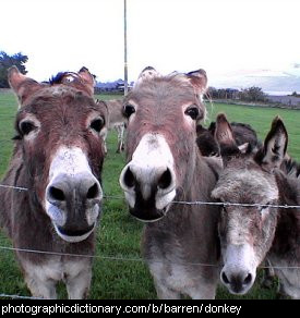 Photo of a group of donkeys