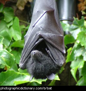 Photo of a bat.