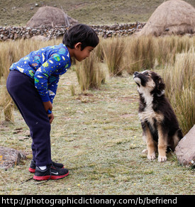 A boy befriending a dog