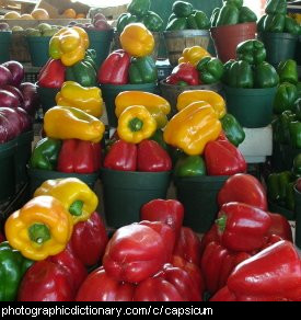 Photo of capsicums