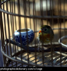 Photo of a bird in a cage