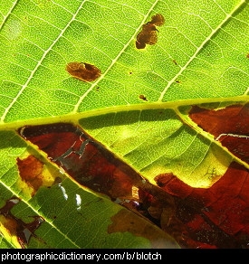 Photo of a blotchy leaf