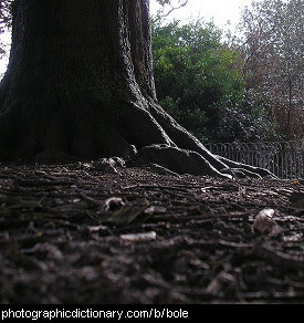 Photo of a tree bole