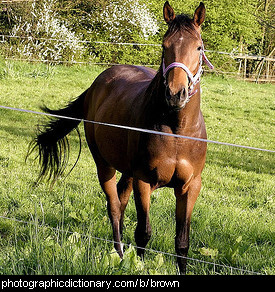 Photo of a brown horse