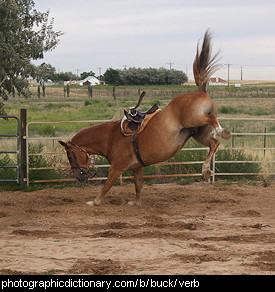 Photo of a horse bucking