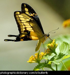 Photo of a yellow butterfly