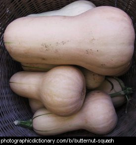 Photo of butternut squashes