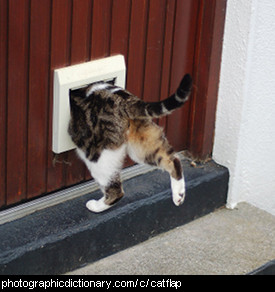 Photo of a catflap