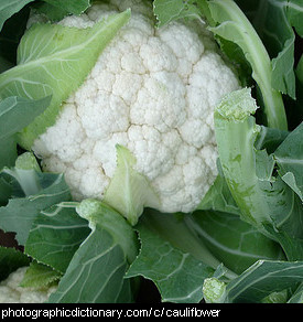 Photo of a cauliflower.