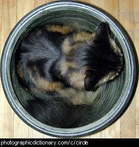 Photo of a cat in a pot.