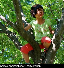 Photo of a child climbing a tree