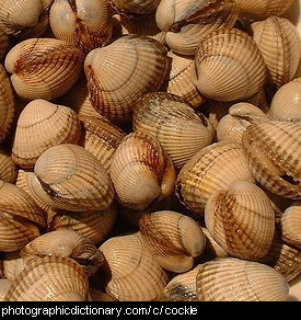 Photo of cockles