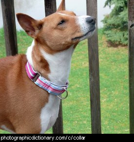 Photo of a dog wearing a collar