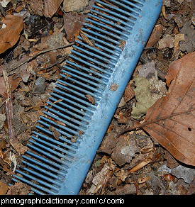 Photo of a comb