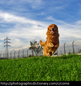 Photo of a dog coming when called