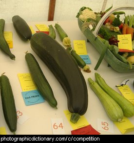 Photo of a vegetable competition