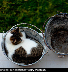 Photo of a cat in a bucket