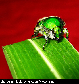 Photo of a green bug on a red background