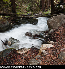 Photo of a creek