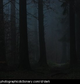 Photo of a dark forest.