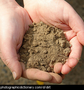 Photo of hands holding dirt.