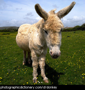 Photo of a donkey