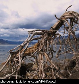 Photo of some driftwood