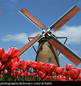 Photo of a windmill and tulips