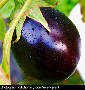 Photo of eggplant or aubergine