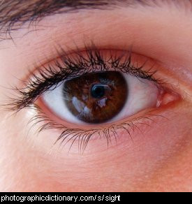 Photo of an eye