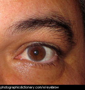 Photo of an eyebrow