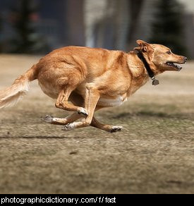 Photo of a dog running very fast