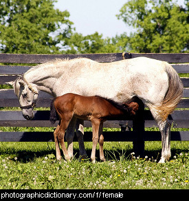 Photo of a mare and foal