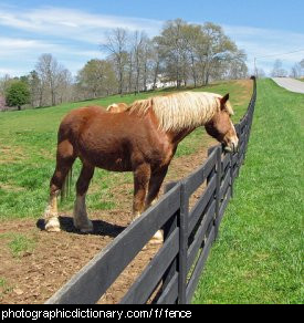 Photo of a horse looking over a fence