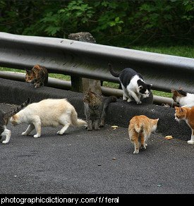 Photo of feral cats