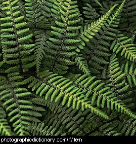 Photo of some fern fronds