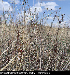 Photo of dry grass