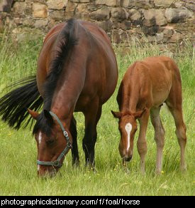 Photo of a mare and foal.