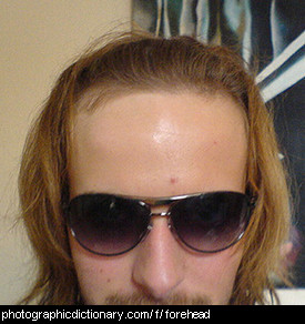 Photo of a man's forehead