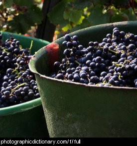 Photo of a bucket full of grapes.